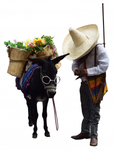 605-Burro-San-Miguel-775x1024.png 88