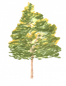 626-Elevation_Feutre_Arbre_1111.png 131