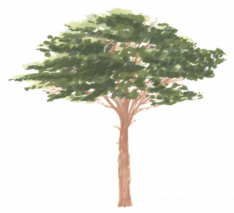 975-Elevation_Feutre_Arbre_444.png 131