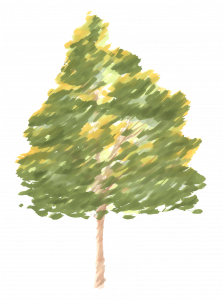245-Elevation_Feutre_Arbre_222.png 131
