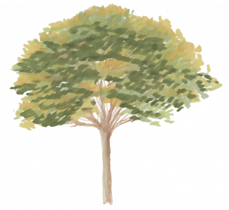 540-Elevation_Feutre_Arbre_333.png 131