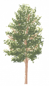 83-Elevation_Feutre_Arbre_1.png 131