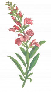 102-flower4.png 155