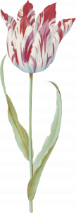 330-flower6.png 155