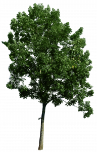 335-tree_corner_49_png_by_gd08-d49f13p.png 177