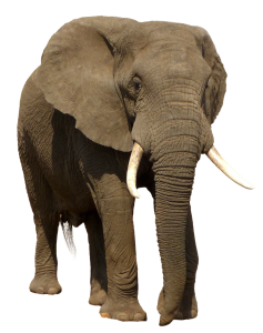 76-ealephantFront.png 178