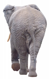 892-elephantBack.png 178
